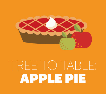 Tree to Table: Apple Pie